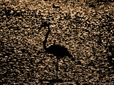 Silhouette of a Flamingo against the Glittering Water