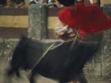 Panned View of a Bullfight