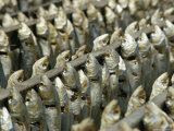 Fish Hang by Their Heads in Rows
