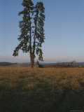 A Lone Evergreen Tree Stands Tall on the Weippe Prairie