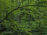 A Lush Green Eastern Woodland View