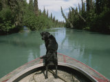 A Black Labrador Dog Travels up the Kenai River on a Boats Bow