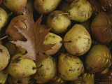 Close View of Pears and a Leaf