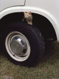Kitten on Tire  in Wheel Well of Vehicle