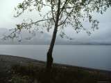 A Storm Passes over Lake Quinault