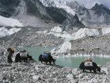 Yak Herders Cross a High Pass Near Mount Everest, Nepal Papier Photo par Bobby Model