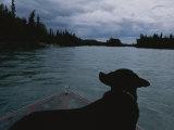 A Black Labrador Dog Travels up the Kenai River on a Boats Bow