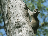 A Raccoon on a Tree Trunk in Rock Creek Park