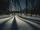 Twilight Tree Shadows on Snow