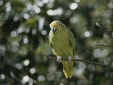 A Mostly Green Parakeet Perched on a Branch