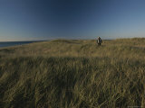 Woman Walking in the Tall Grass Near a Beach