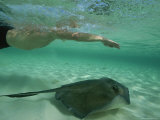 A Swimmer with a Southern Stingray