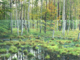Woodland View with Marsh  Muritz National Park  Germany