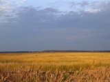 View of an Expanse of Marsh Grass in Bombay Hook National Wildlife