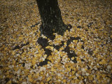 Autumn Leaves Surround a Tree Trunk