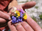 Close View of Mountain Wildflowers Picked in the Karakorum Mountains