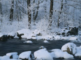 A Stream Running Through Snowy Woodland