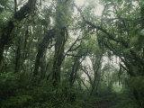 Light Filters Through Rain Forest Foliage  Costa Rica