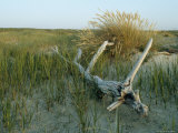 Sand Marsh Grasses and Driftwood