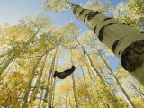 Woman in Hammock in Aspen Trees
