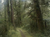 Walking Trail Along the Hollyford Track Through the Rain Forest