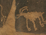 Petroglyphs  Animal Rock Art