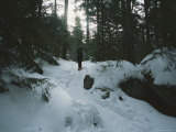 A Hiker Passes Through a Snowy Forest on a Trail