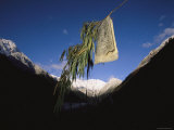 A Prayer Flag Hangs from a Branch
