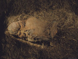 The Cloth Wrapped Skeleton from a Plant-Filled Peruvian Mummy Bundle