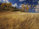 Autumn Meadow Scene