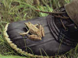 A Frog Rests Upon a Rubber Boot