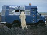 A Curious Polar Bear Investigates a Bear-Watching Vehicle