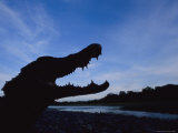 A Silhouetted Black Caiman with its Mouth Open in Warning