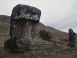 Moai Head Sculptures on a Slope of Rano Raraku  a Soft Stone Quarry