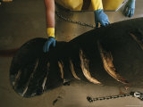 Manatee Carcass with Slice Marks from Boat Propellers