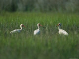 View of Ibises