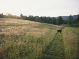 A Dog Waits for its Master in a Swath of Freshly Mown Field at Sunset