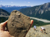 A Fossil Found in the Shale at Burgess Shale in Yoho National Park