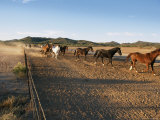 Horses Trot Along a Wire Fence on a Ranch