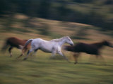 A Group of Running Horses on the 63 Ranch