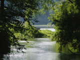 A Riparian Forest Borders the Susquehanna River