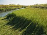 Wetlands of the Mackenzie River