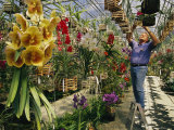 A Man Inspects Scores of Orchid Hybrids at His Florida Nursery