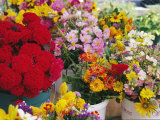 Flowers Sold at Market in Dupont Circle