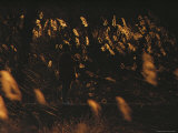 A Man Fishes Surrounded by Sunlight-Illuminated Tall Grasses