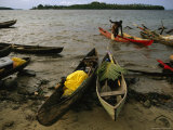 Wooden Canoes Lay Beached on the Shore  a Man Pulls Another Canoe onto the Shore