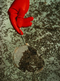 A Gloved Hand Using a Small Sieve to Collect Dark Floating Particles