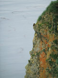 An American Bald Eagle Perches on its Clifftop Nest