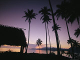 Palm Tees and Hut Silhouetted against Lavender Sea and Sky at Sunrise