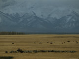 Herder Moves her Cattle Beneath the Khoridol Saridag Mountains